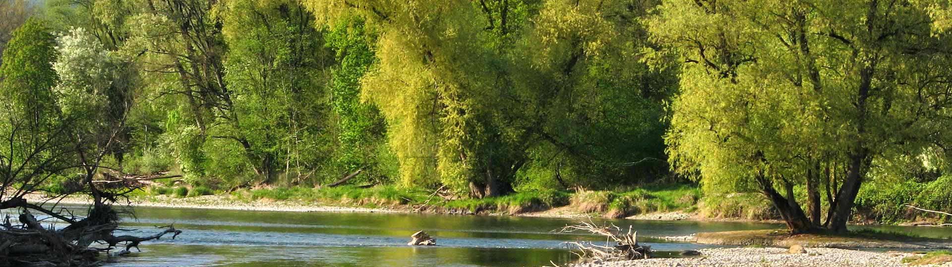 Aare-Naturschutzgebiet
